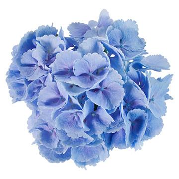 17_Lollypop-blauw