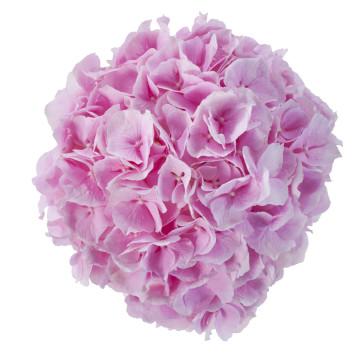 F2D_051035_Verena roze