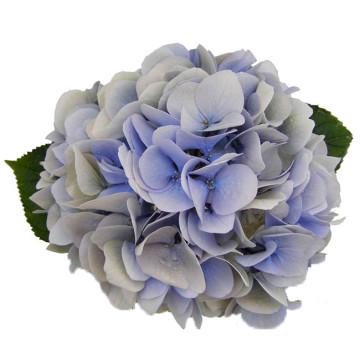08-Verena-Classic-Blauw