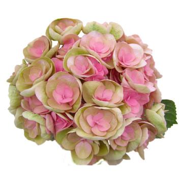 19-Papillon-Classic-roze